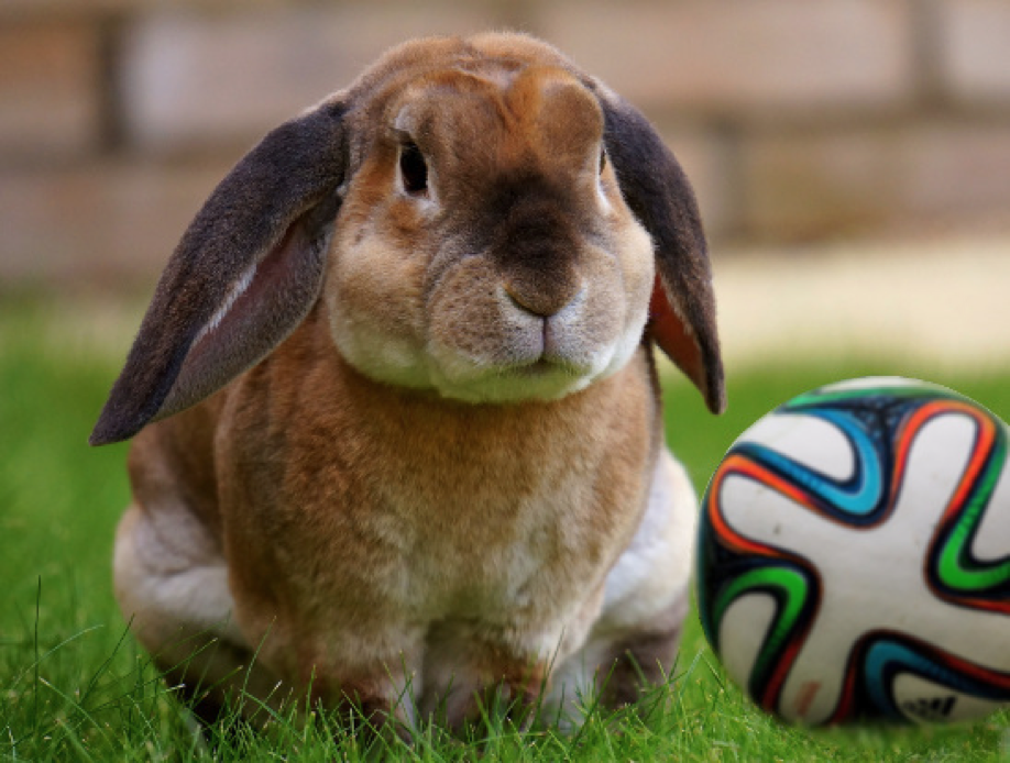 Football and Rabbit